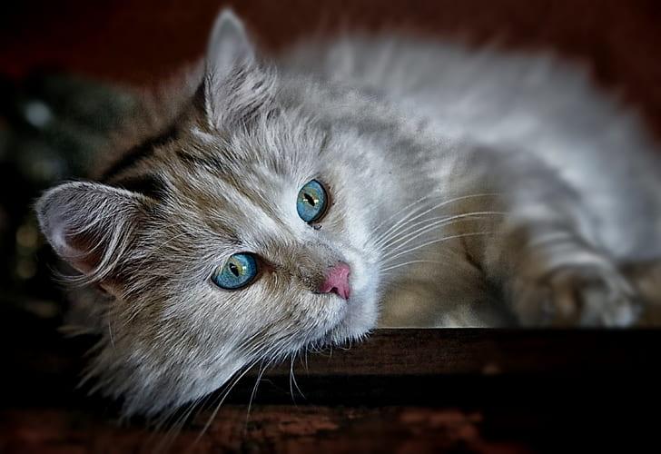 selective focus phot oof gray cat