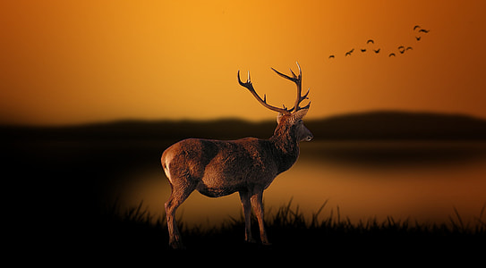 selective focus photography of brown buck