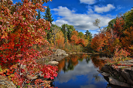 stream between red and green trees under white and blue sky during daytime