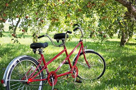 red tandem cruiser bike under tree