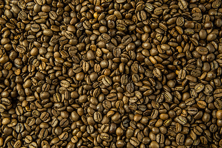 Close-up shot of fresh coffee beans