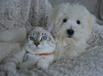 medium-coated white puppy beside short-fur brown cat lying on white textile