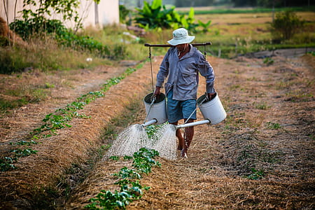 farmer watering the plants