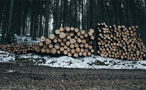 brown wood logs lot