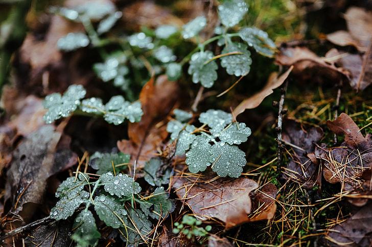 A walk in an autumn forest