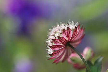 tilt shift photo of white and pink flower