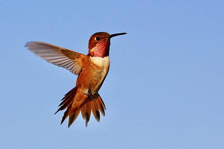 photo of red and white hummingbird