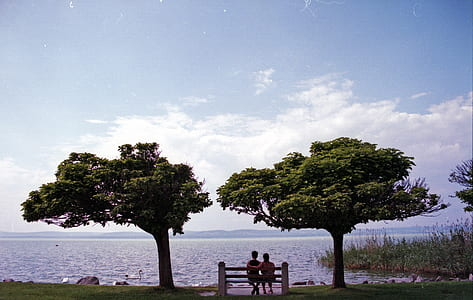 couple on bench between trees beside body of water