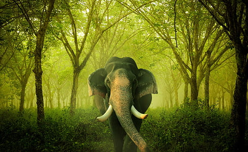 wildlife photography of elephant
