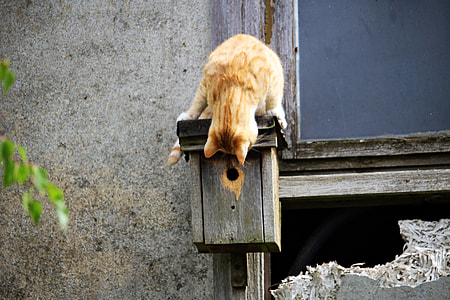 orange Tabby cat on brown wooden mail box