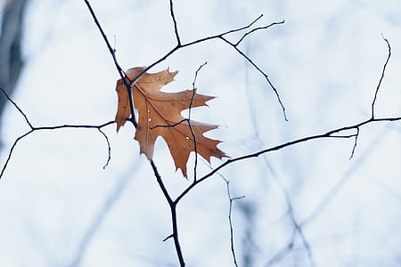brown dry leaf photo during daytime