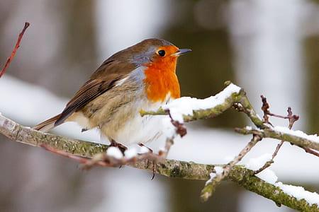 orange neck brown feather bird on tree