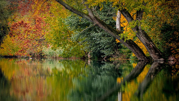 calm lake on forest