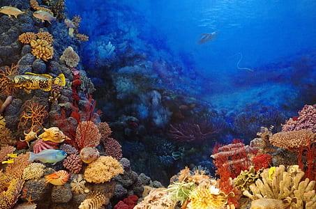 school of fish underwater photo
