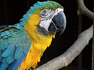 yellow and green parrot on brown wooden tree
