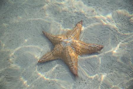 brown star fish under water