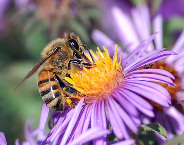 honeybee perched on purple petaled flower at daytime