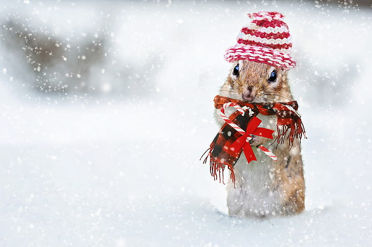 focus photography of brown hamster on snowy place