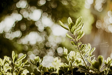 Selective Photograph of Green Plants at Daytime