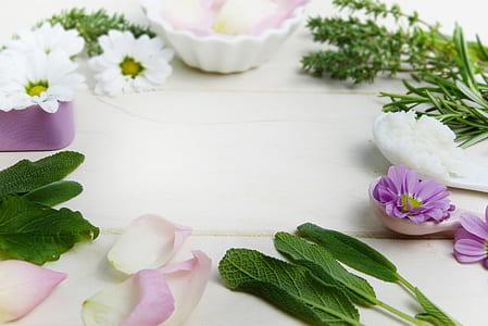 purple and white petaled flower arrange on white surface