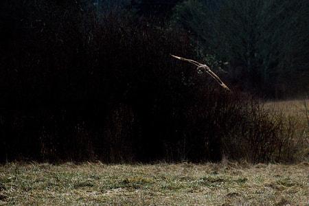 bird flying near green trees and field