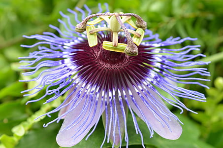 macro photography of purple petaled flowr