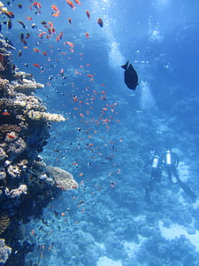 two scuba divers near corals