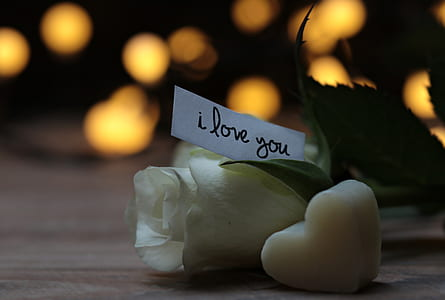 white paper with i love you text on white rose flower