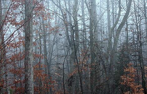 brown tree fogs