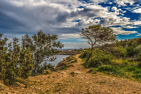 green leaf trees and grass on cliff by the sea under cloudy sky