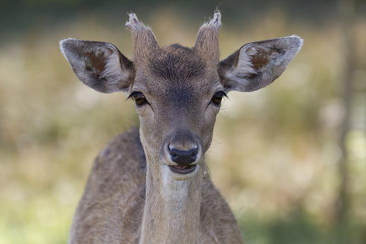selective focus photo of brown doe