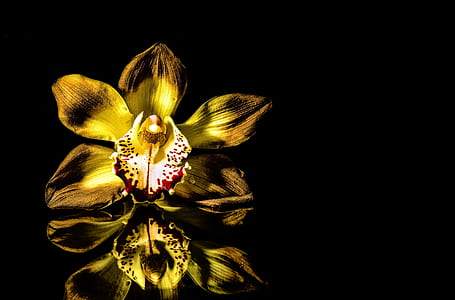 selective focus photography of yellow boat orchid flower