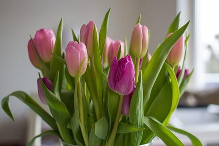 pink and purple tulip centerpiece