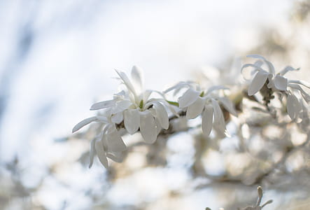 White Petaled Flower during Daytime
