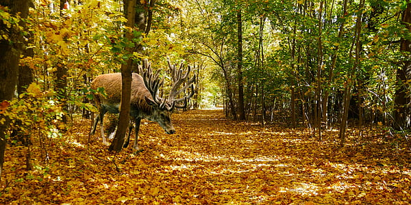 brown moose in the middle of forest