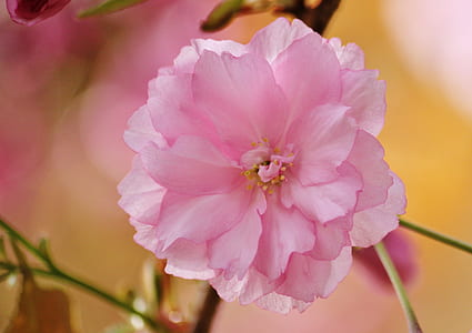 shallow focus of pink petaled flower
