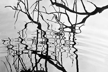 tree branch on body of water