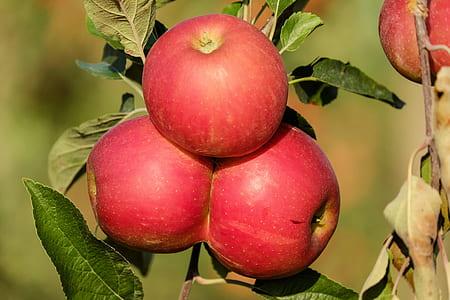 focus photo of red Apple