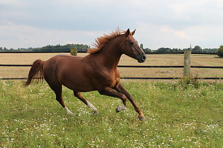 brown horse on green grass field