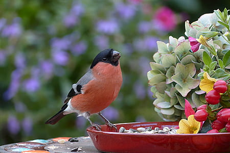 orange and gray bird on red plant pot