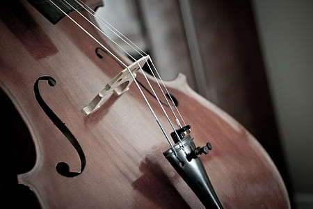close-up photography of brown violin