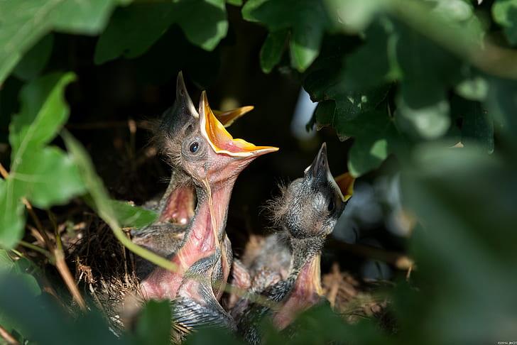 chicks on nest