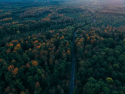 aerial shot of highway between forest at daytime