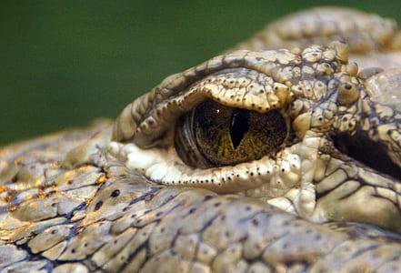 Macro Shot of Reptile