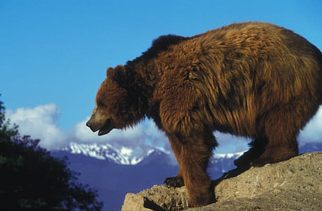 brown bear on gray rock during daytime during daytime