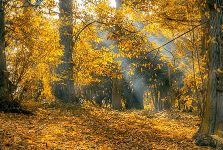 autumn season reflecting sun ray on trees