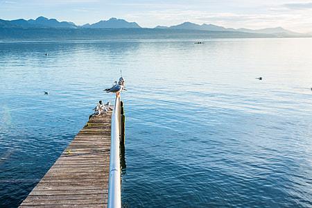 Birds Pier Lake Water