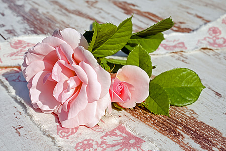 pink rose on brown wooden board