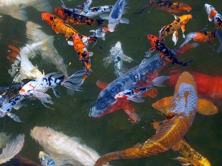photo of school of fish
