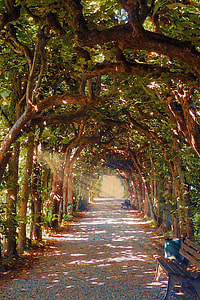 hallway covered with green leaf trees during daytime